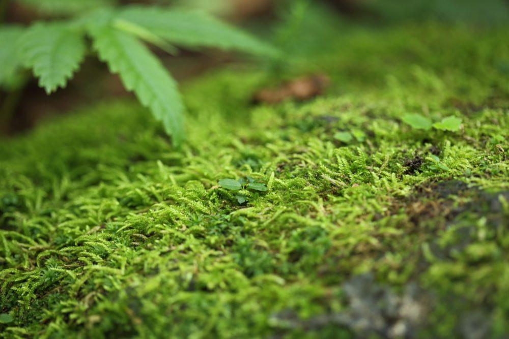 苔観察も魅力のひとつ