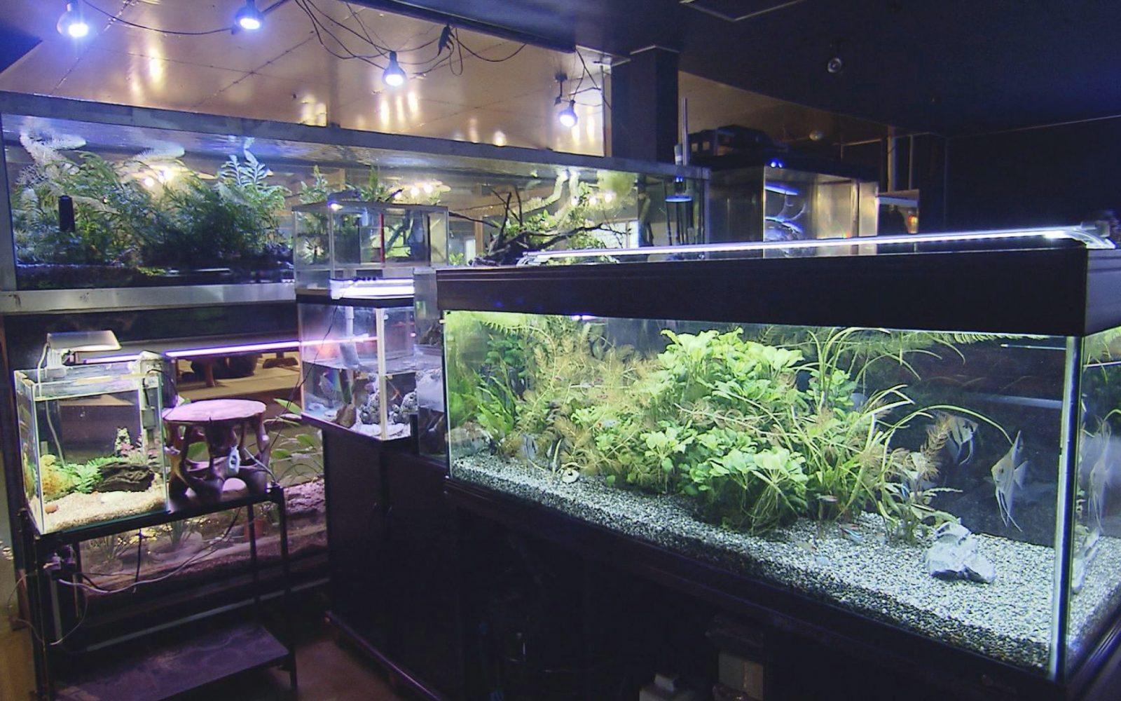 熱帯魚を眺めながら体も心も癒される一風変わったお食事処