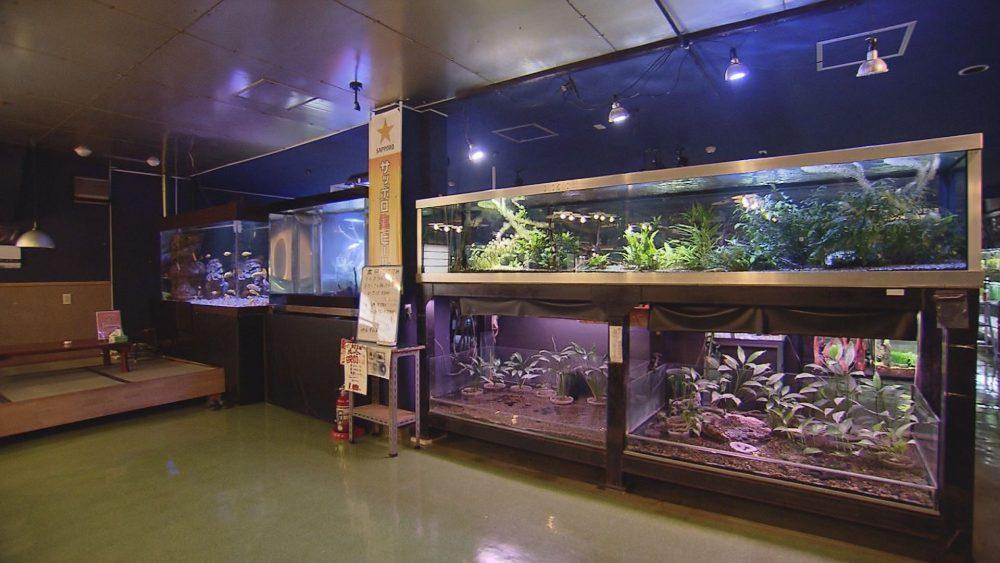 熱帯魚を眺めながら食事を